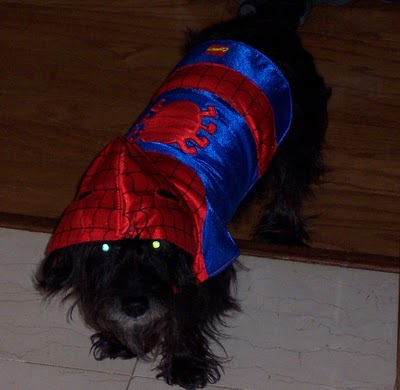 Spider Dog Noel