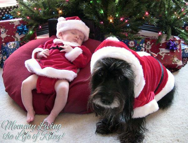 Purina Pro Plan My Great Dog Noel