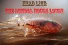 Head Lice - The School House Louse