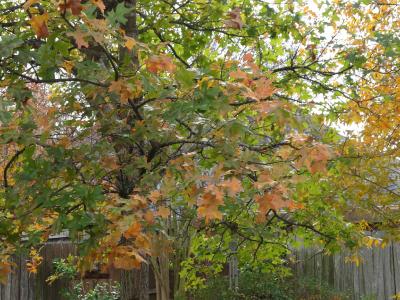 Winter in My Backyard