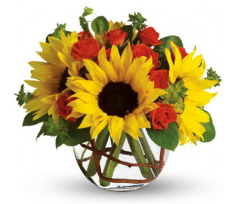Teleflora Sunny Sunflowers