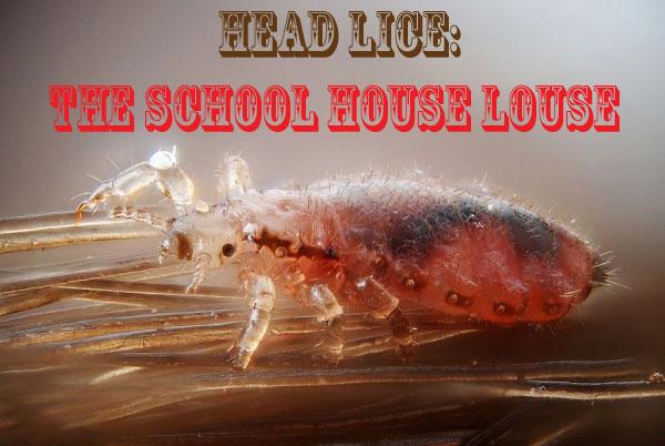 Head Lice - The School House Louse